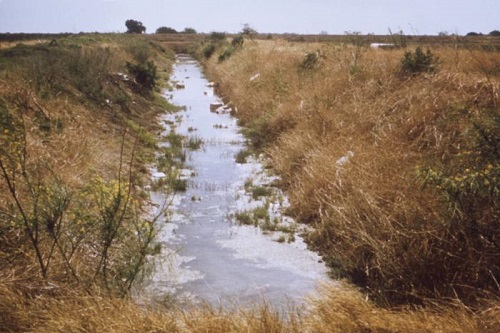 Irrigation ditch that has been compromised by trash dumping and vegetation