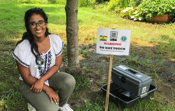 Intern setting up a gravid mosquito trap for West Nile virus surveillance.