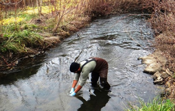 Environmental Health Professional standing in creek collecting water samples
